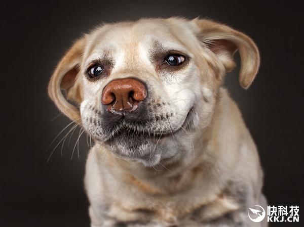 """饥饿狗狗""""捕食""""小饼干:这表情我的天呐"""
