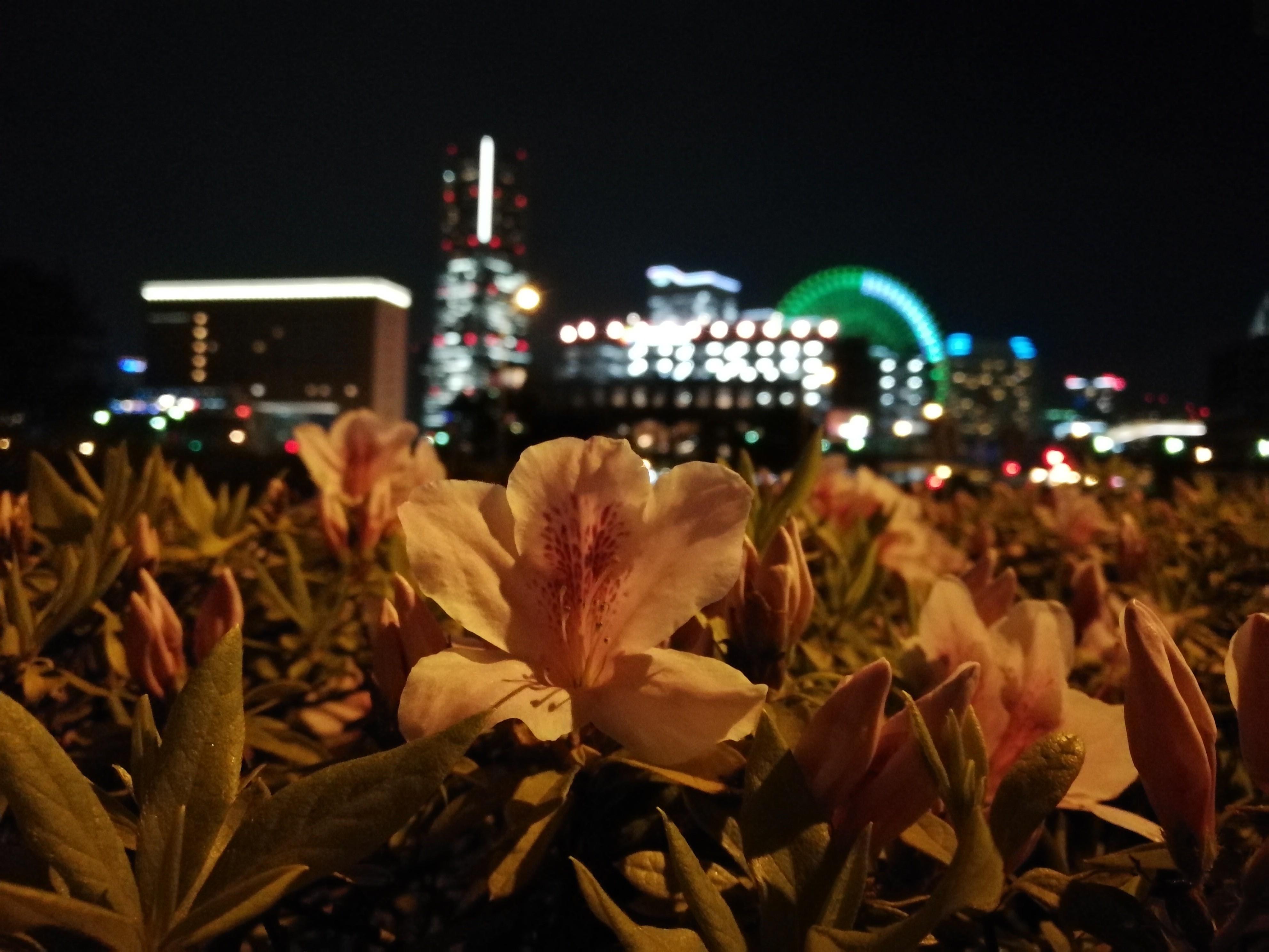 iPhone 7 Plus单挑四大安卓旗舰拍照的照片 - 32
