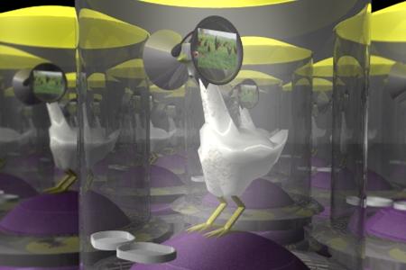科学家脑洞炸裂 要用VR来养鸡!