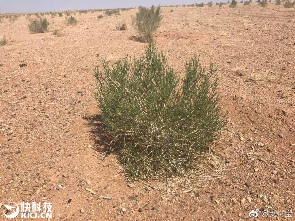 你们支付宝里种的树长大变绿了