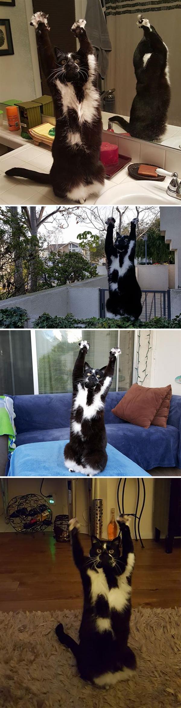 網友分享喵星人古怪照片 一整天的笑點都在這了