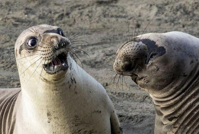 一大波搞笑动物摄影来了 长颈鹿神错位!