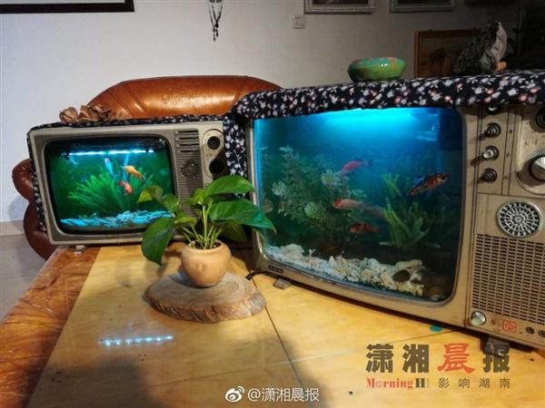 湖南小伙用黑白电视养金鱼:第一眼还以为是彩电