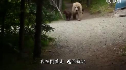 男子徒步旅行遇三只熊尾随 心惊胆战倒着走