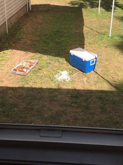 家庭野餐剩的蛋糕忘收 引来馋嘴狗熊:吃了个精光