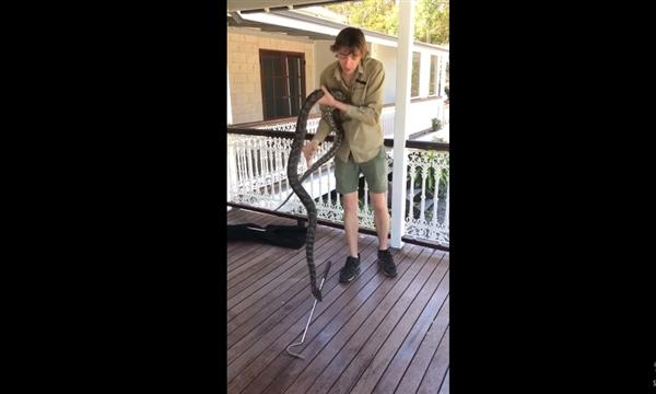 澳洲捕蛇人徒手活捉超级巨蟒:结局万没想到