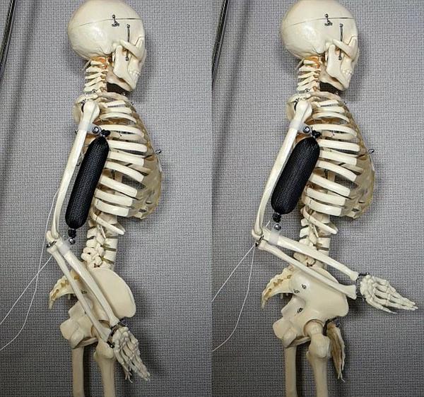 宅男偷笑:史上最逼真人造肌肉搞定 机器人更强大