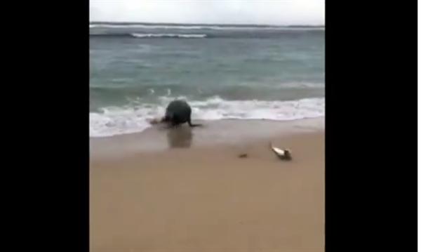 澳洲女子海边钓鱼:结果把饿坏的海狮逼急了