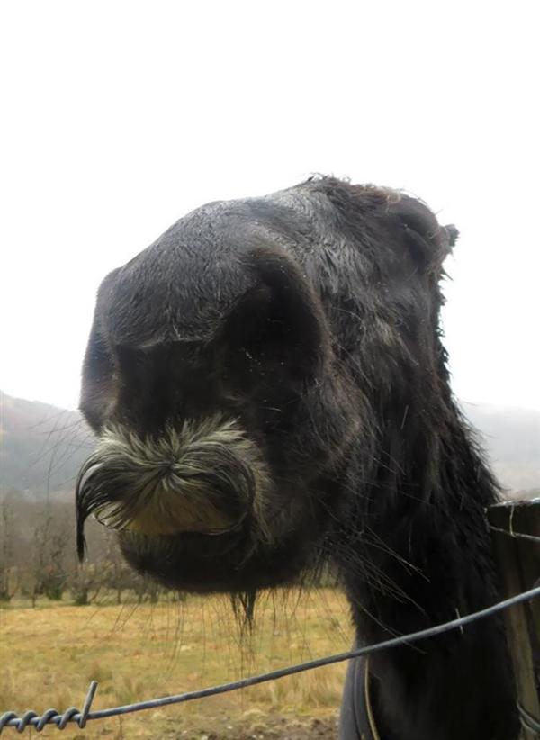 原来马也会长胡子 这画风…我凌乱了