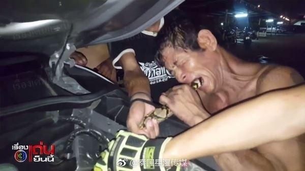 4米长巨蟒钻入车内 泰国男子竟用嘴咬出