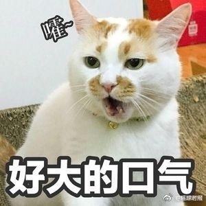 """我们的表情包没了 网红猫""""楼楼""""去世 68万粉丝哀悼"""