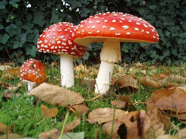 闹市树上长6斤蘑菇 保安大叔炒炒吃了