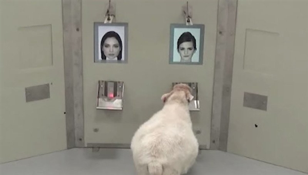 最新研究发现:羊可以分辨照片中的名人脸