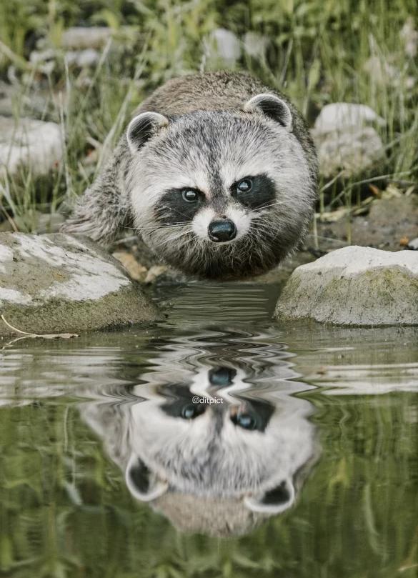 当动物全都变成圆的……大熊猫简直萌化了