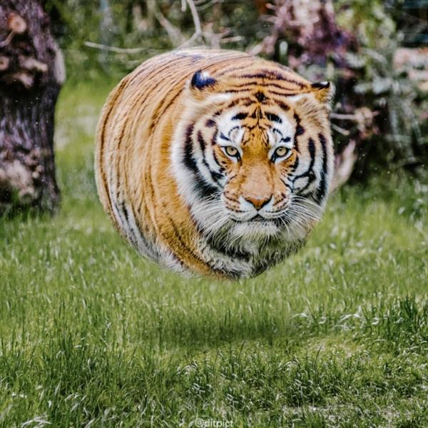 印度尼西亚艺术家aditya利用photoshop将动物变成了方形的,受到了不少