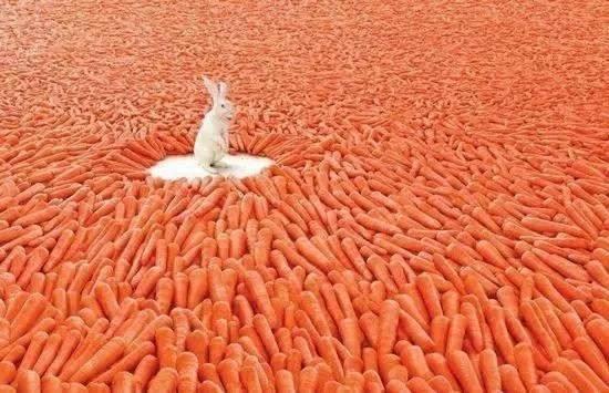 兔子最爱胡萝卜?真相太毁童年了