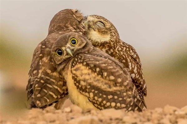 笑掉大牙!2017年搞笑野生动物摄影大赛入围作品赏