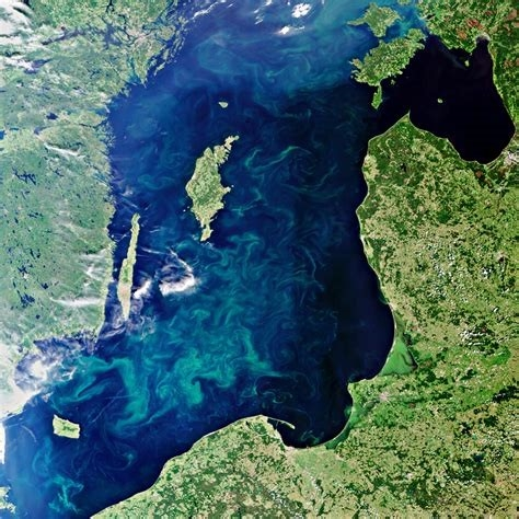 气候变化带来生物危机 藻类扩散威胁海洋生态系统