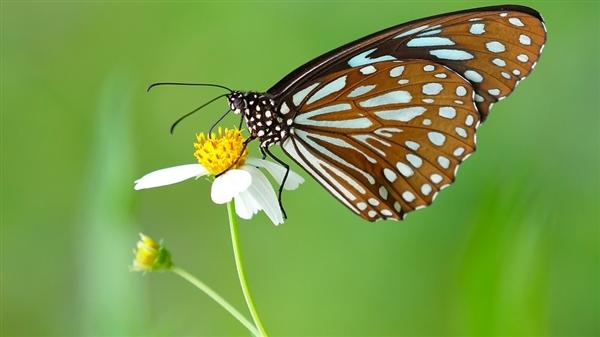 科学家发现2亿年前的蝴蝶化石 先于开花植物出现