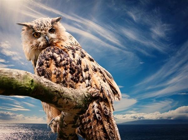 美国奇葩官司:为了保护一种鸟要杀另一种鸟