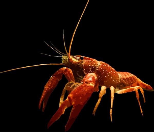 龙虾在瑞士得到法律保护 死法变得十分人性化