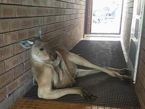 游客公厕门口偶遇袋鼠:这姿势太妖娆不敢看