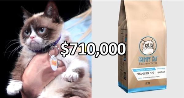 别人家的猫!不爽猫又为其主人赚了71万美元