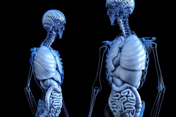 医学研究重大突破!以色列医院体外培植新骨骼