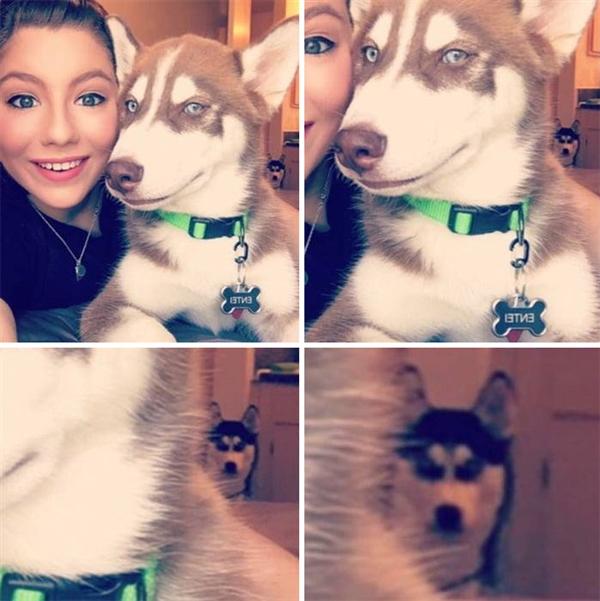 有图有真相:二哈果然是最古怪的狗狗 没有之一