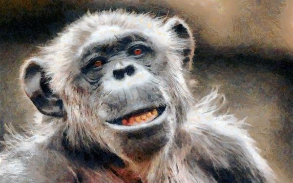 研究发现:黑猩猩竟然喜欢吃年轻猴脑