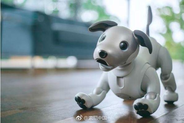 """日本寺庙为114只索尼Aibo机器狗举行葬礼:最老""""20岁"""""""
