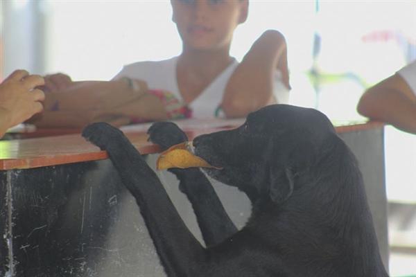 看到学生拿钱买饼干后 这只狗做出了惊人举动