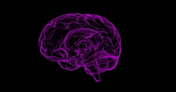 厉害了:微软正开发利用大脑植入增强智力技术