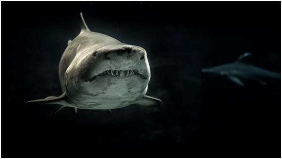 愤怒的鲨鱼拖着美国一渔民的皮划艇长达10分钟