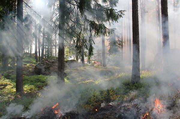 美国电线老化引发火灾致15人丧生 电力公司试图推卸责任