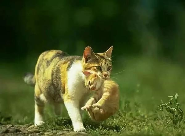 """为什么掐住猫的后脖颈就""""冻住了""""?好神奇图片"""