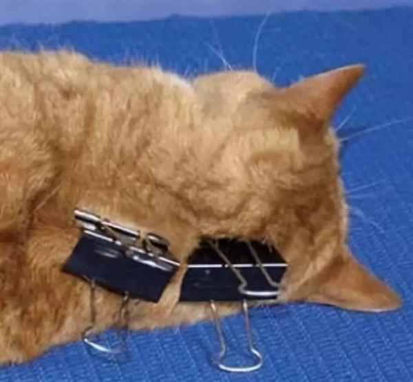 为什么掐住猫的后脖颈就
