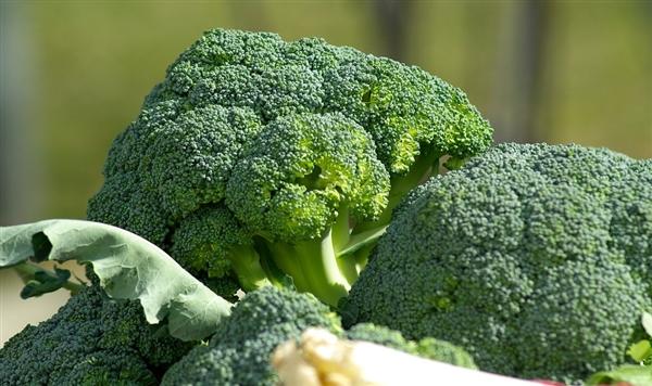 NASA为国际空间站送去生长箱 航天员有望吃上新鲜蔬菜