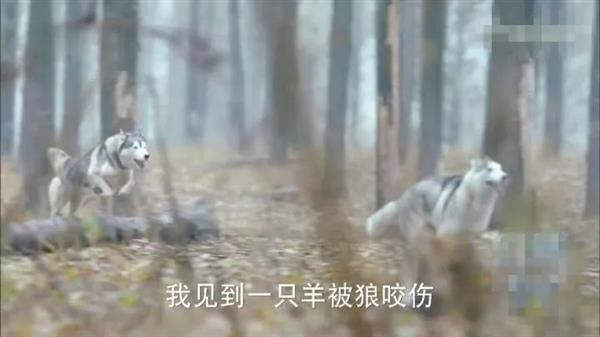 动物园以狗充狼:竟是因为爱情?