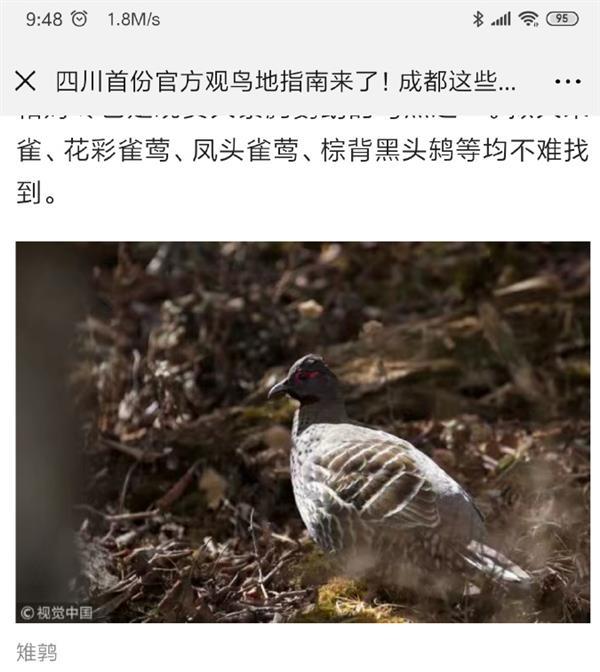 视觉中国复出后再惹争议:裁失踪摄影师图片水印牟利