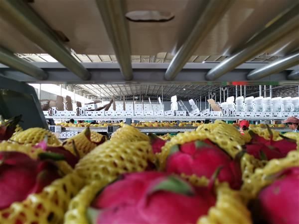 """广西农民也能一键发货  菜鸟数智物流带来""""水果自由"""""""