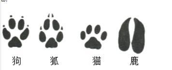 """老虎逃走啦:这份追踪""""秘籍""""拿走不谢"""