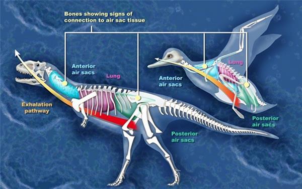 恐龙能够长那么大 人造啥弗成?