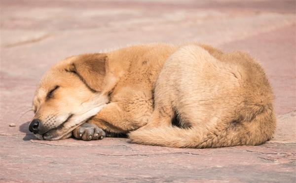 为何有人每天只睡4小时依然精力充沛?研究揭秘真相