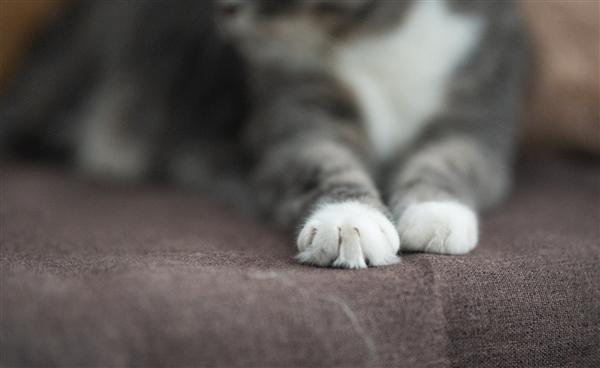 简直忤逆物理规律:为什么猫咪落下时总是脚着地?