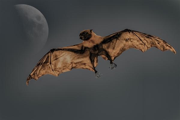 """吸血蝙蝠竟然用带血的""""法度榜样舌吻""""来交同伙"""
