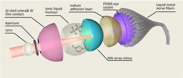 科学家造出全球首个3D仿生眼:视觉和夜视能力甩人眼几条街