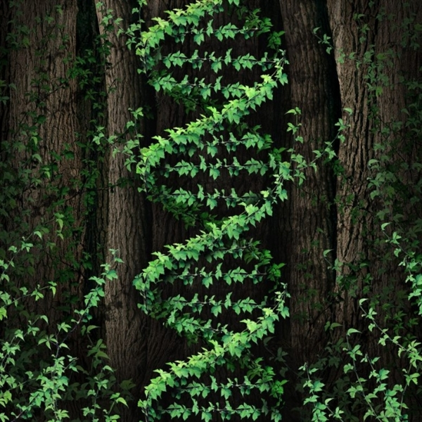 DNA揭秘:植物竟然和人相通 能够制造喜欢情与搏斗