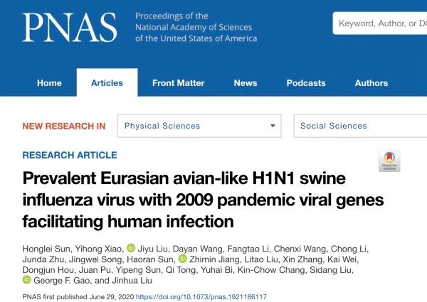 学者发现新式重组猪流感病毒:具备在人群中通走潜力