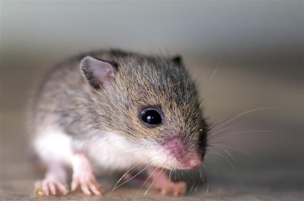 内蒙古巴彦淖尔发现疑似鼠疫:启动3级预警